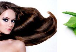 Nha đam có tác dụng tuyệt vời trong việc làm đẹp tóc.