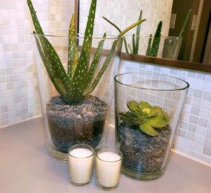 cách trồng cây nha đam tại nhà