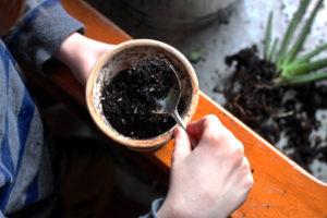 Cách trồng cây nha đam trong phòng ngủ