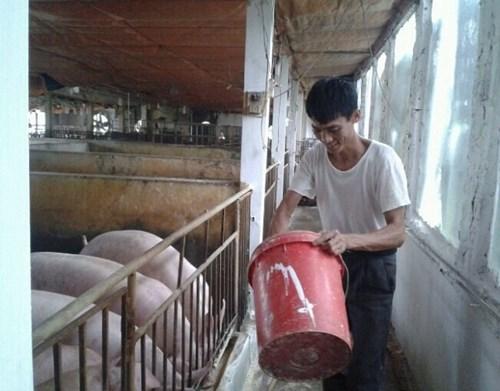 Miễn chê thịt lợn sinh học