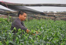 Thành tỷ phú nhờ trồng ly
