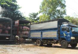 Heo, gà có thêm thị trường Campuchia