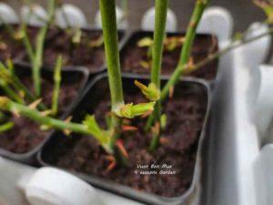Giai đoạn chuẩn bị đất trước khi gieo trồng