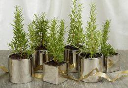 Hương thảo là loại cây trang trí đẹp mắt, hương thơm ngạt ngào giúp giải stress