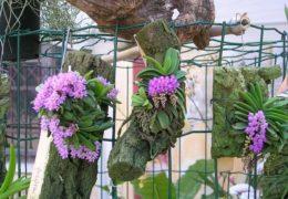 Cách trồng hoa lan rừng tại nhà