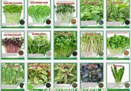 Cách trồng rau tại nhà hiệu quả an toàn