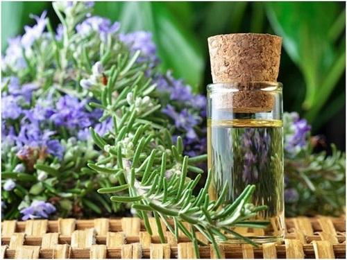 công dụng của cây hương thảo