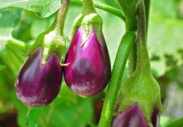Các loại rau trồng mùa hè nhanh ăn, dễ trồng nhất