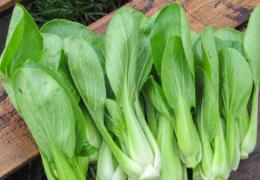 Cách trồng cải thìa xanh sạch ngay tại nhà