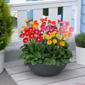 Để hoa ra đẹp, nên trồng hoa trong nhà có mái che