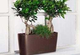 Cách chăm sóc cây cảnh trong chậu để cây phát triển tốt nhất