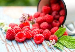 Cách trồng mâm xôi đảm bảo sai trĩu quả
