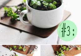 5 cách tự làm chậu trồng hoa đơn giản, xin xắn