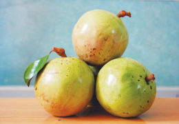 Công dụng của cây vú sữa: Từ thân đến trái đều có tác dụng