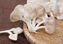 Cách trồng nấm bào ngư sạch ngay tại nhà