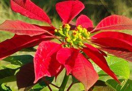 Cách trồng và chăm sóc hoa trạng nguyên