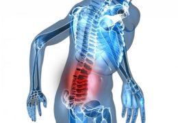 Cây lược vàng chữa đau lưng hiệu quả đến mức nào?