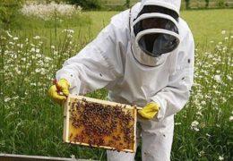 Chia sẻ kinh nghiệm nuôi ong lấy mật cho hiệu quả cao nhất