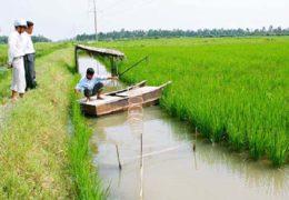 Kỹ thuật nuôi cua đồng kết hợp trồng lúa