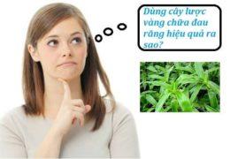 Cách dùng cây lược vàng chữa đau răng hiệu quả nhất
