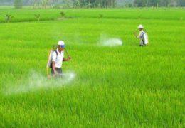 Quy trình và kỹ thuật trồng lúa