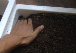 Cách trộn và làm đất trồng hoa