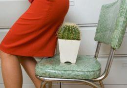 2 cách dùng cây vông chữa bệnh trĩ