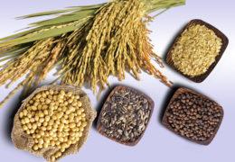 Người bệnh ung thư gan nên có chế độ dinh dưỡng như thế nào?