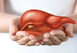 Bài thuốc từ cây nhân trần trị bệnh gan