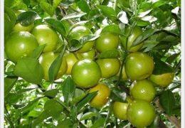 Kỹ thuật trồng cây quý đường