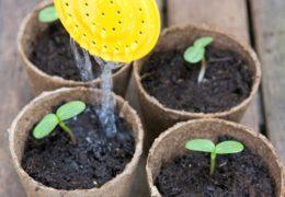 Cách lưu ý trồng cây