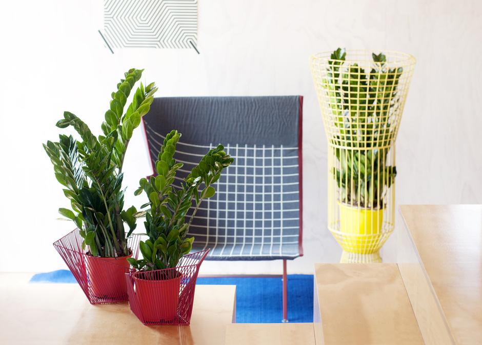 Cách trồng cây kim tiền cho lộc vào nhà