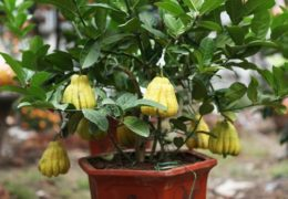 Chú ý đến sâu bệnh của cây để có thể phòng ngừa kịp thời