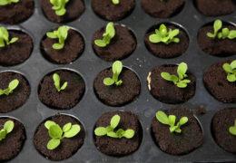 Lưu ý khi trồng cây