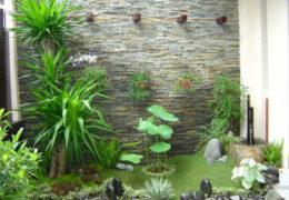 Lưu ý trồng cây cảnh