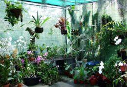 Cách trồng lan tại nhà