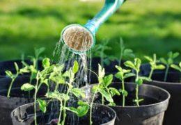 Lưu ý khi trồng cây cảnh