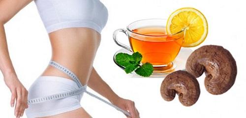 Giảm béo bằng nấm linh chi là phương pháp giảm béo hiệu quả