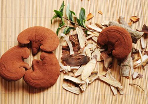 Sử dụng nấm linh chi để giảm cân