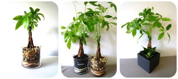 Tất tần tật về cách trồng cây kim ngân