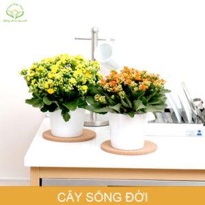 cay-song-doi-phong-thuy-trong-nha