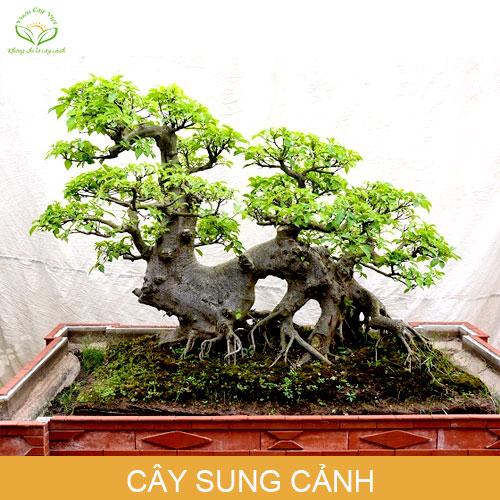 cay-sung-canh-phong-thuy-trong-nha