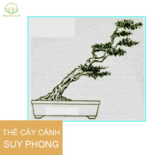 caycanhbonsaithesuyphong