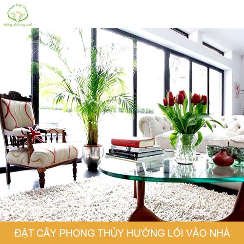 huong-dan-dat-cay-canh-phong-thuy-trong-nha-huong-loi-vao