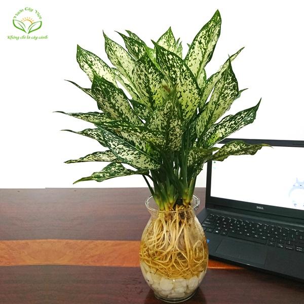 Phương pháp trồng cây thủy sinh