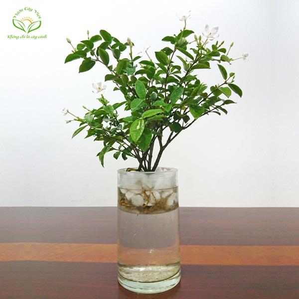 Chậu trồng cây thủy sinh