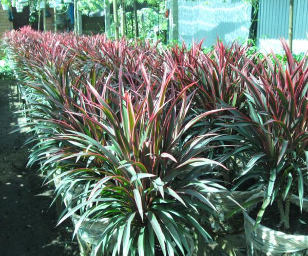 10 cây cảnh trồng trong nhà giúp xua đuổi bệnh tật