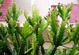 5 loại cây không nên trồng trước cửa nhà tránh rước họa cho gia chủ