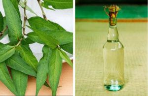 Rượu rau răm trị nấm da tay vô cùng hiệu quả mà người bệnh nên thử