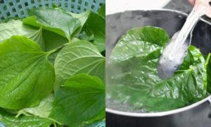 Khả năng kháng khuẩn cho bệnh nấm da tay rất tốt nếu sử dụng tay ngâm trong nước lá trầu